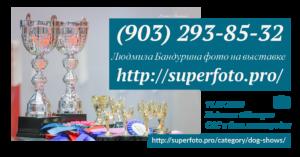 Фотографирую на выставке собак в Подольске (CAC и моно, КЛЖ «Монарх» 11.07.2020)