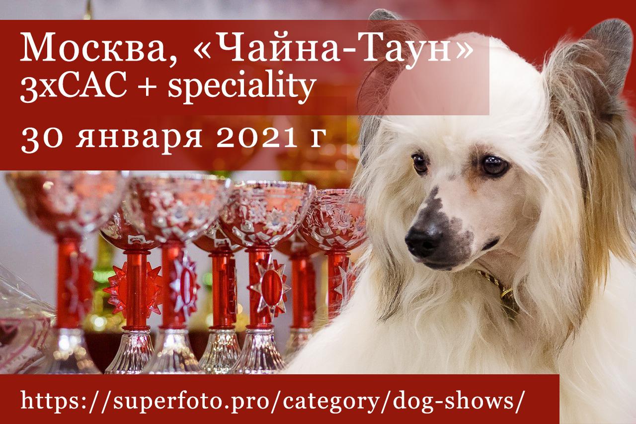 Фото на выставках в «Чайна-Тауне» (Москва) 30.01.2021