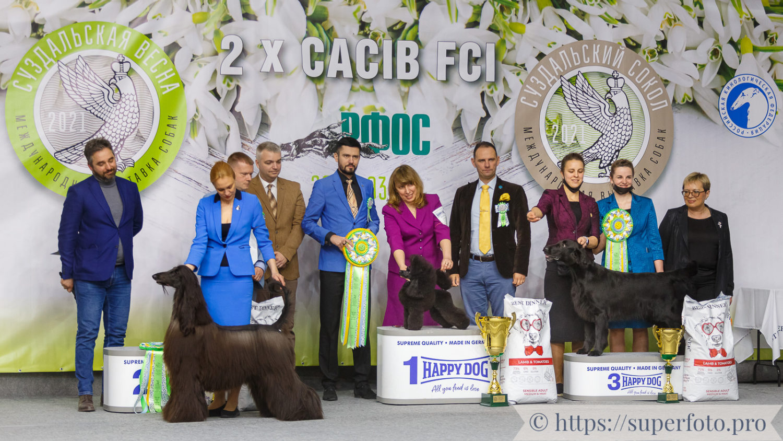 BEST IN SHOW CACIB FCI «Суздальский Сокол» 21.03.2021