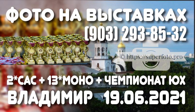 Фото с выставок во Владимире 19.06.2021 (2хСАС + блок моно + Чемпионат ЮХ)