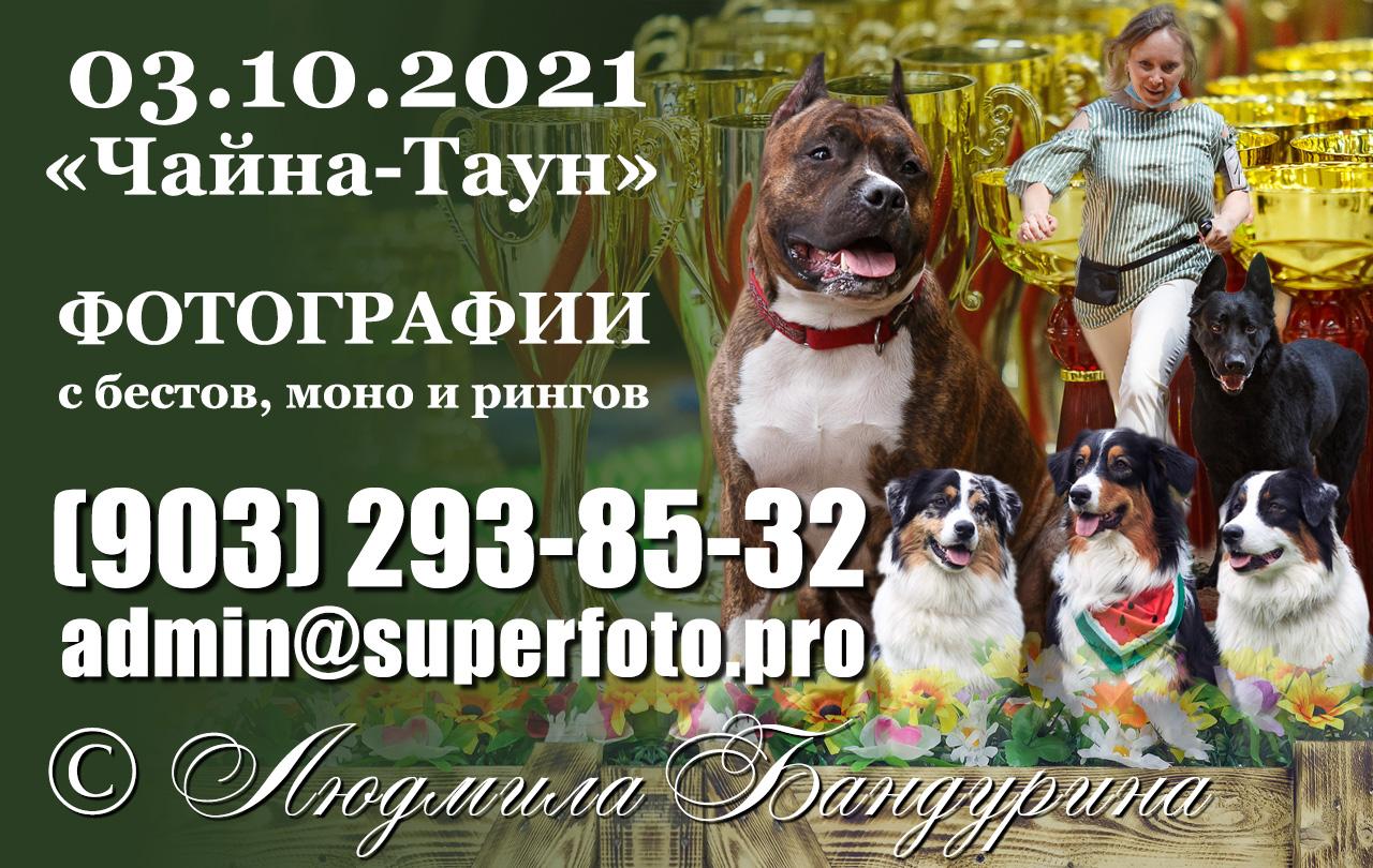 Здесь можно приобрести фото с выставок собак в Москве (2хСАС, монопородные выставки и спешиалти в ТЦ «Шелковый путь») 3 октября 2021 г. Большая часть превью размещена в облаке mail.ru — здесь вы найдете ссылки на тематические подборки фотографий по породам и выставкам.